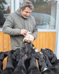 Hundebetreuung Hundeschule Hundezucht